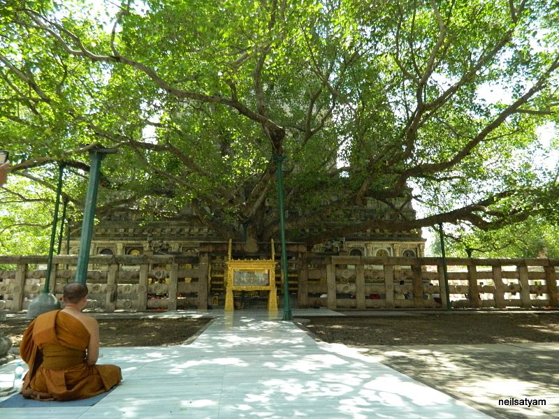 Mahabodhi Tree of Buddhas enlightenment