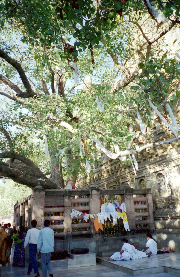 Pisces and Pisces – The Mahabodhi Tree in Bodh Gaya
