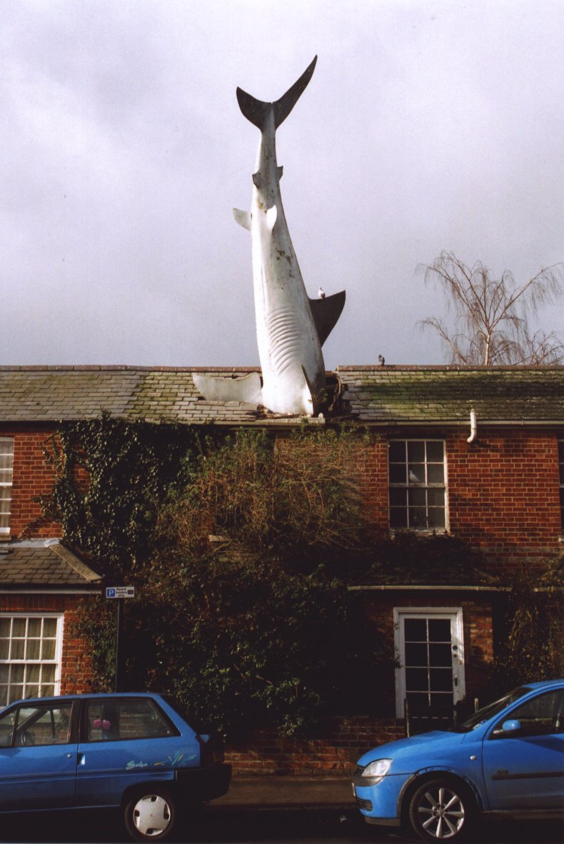 The Headington Shark sculpture is located in the combination of earth sign Taurus with fire sign Leo photo Henry Flower, GNU/FDL