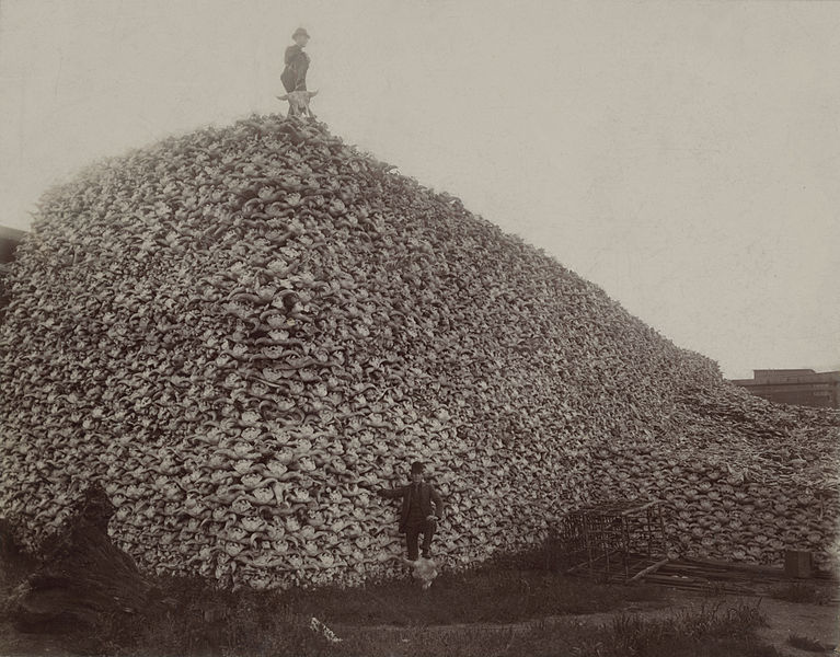 Back to the roots of the American Way of Life: Bison Skull Pile in the 1870ies.