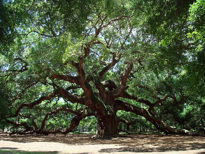 Leo with Pisces: the magic of Angel Oak