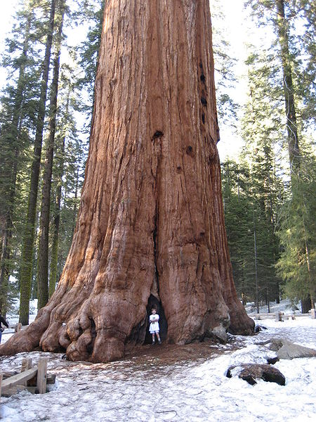 General Sherman Tree in astrogeography